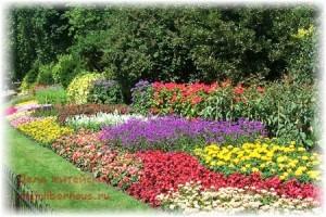 Дачникам на заметку. 9 полезных секретов при работе с растениями.
