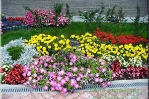 Клумба на даче для начинающих садоводов