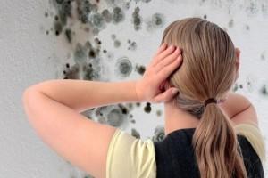 Плесень на стенах как избавиться