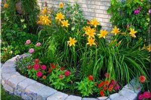 Уход за уличными цветами в августе и сентябре