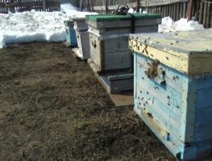 пчёлы совершают облёт