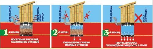 Механизм действия бактерий
